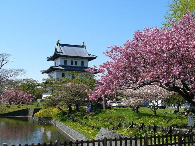 Hoa anh đào tại công viên Matsumae