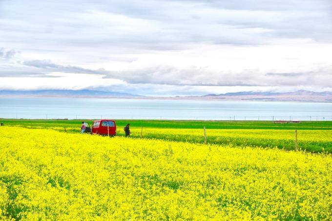 """""""Hoa vàng cỏ xanh"""" tuyệt đẹp tựa tranh vẽ tại Trung Quốc - ảnh 1"""